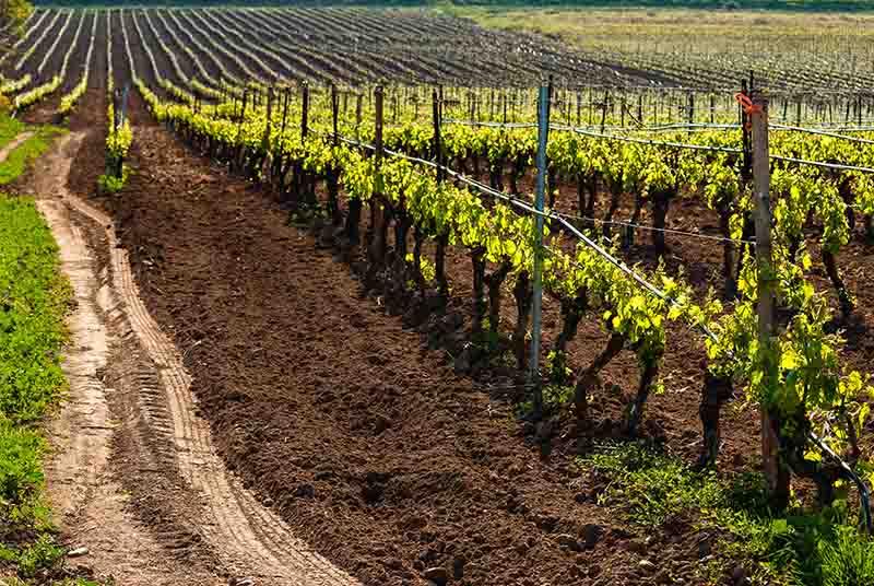 ナパ・ヴァレーの土壌