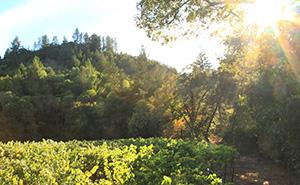 Dyer Vineyardの葡萄畑