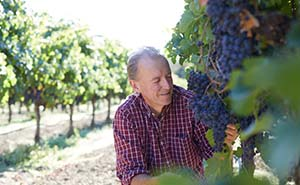 Goldschmidt Vineyardsの葡萄畑
