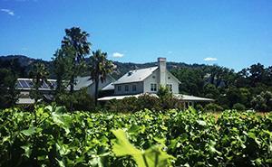 Larkmead Vineyardsの葡萄畑