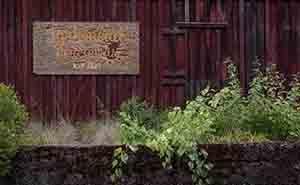 Larkmead Vineyardsの葡萄園