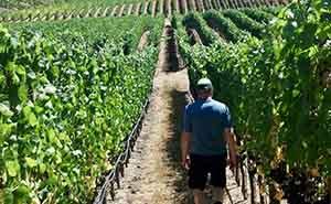 Pont Neuf Winesの葡萄畑