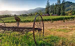 Robert Craig Wineryの葡萄畑